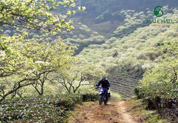 Kinh nghiệm du lịch mộc châu bằng xe máy 1