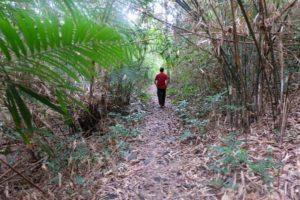 trekking-cat-ba1